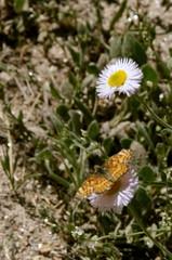 (engorons) Tags: spring florafauna highsonorandesert