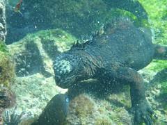 Underwater eating