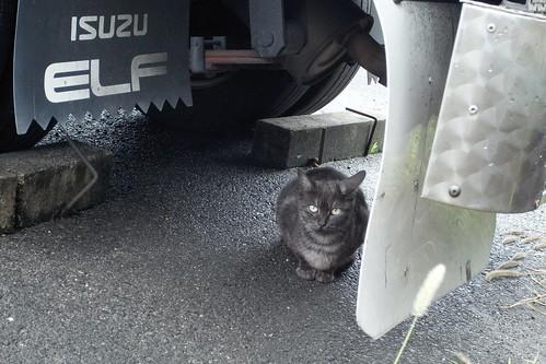Today's Cat@20090723