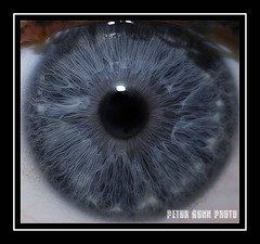 The king and eye (Ptur Gunn Photograpphy) Tags: blue storm macro eye ball photo iceland sony sigma eyeball alfa mm 105 700 sland petur gunn