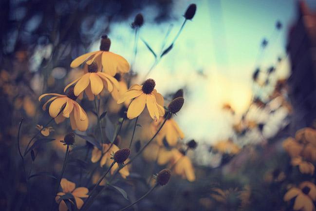 city wildflowers