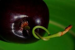 351/365 Tongue Tied (Meshl) Tags: twinpeaks cherrystem msh09096 msh0909 texturebylesbrumes