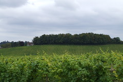 Denbies Wine Tour