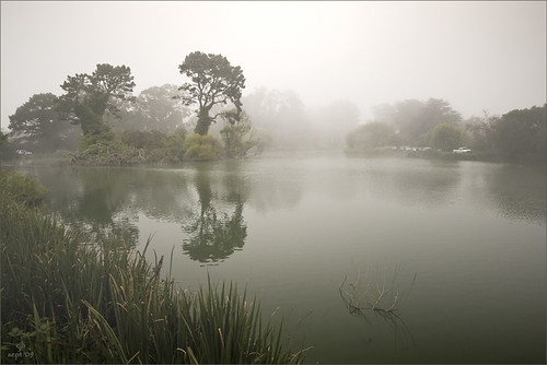 Fog at Stow Lake