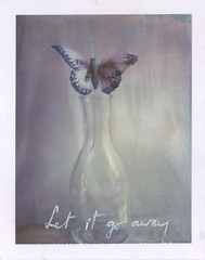 Misery is a butterfly (emilie79*) Tags: butterfly blonderedhead polaroid180 iduvfilm