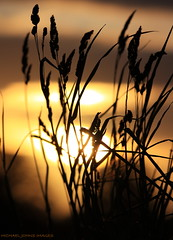 SUNSET THROUGH THE GRASSES (michaeljohnsimages) Tags: camera ireland light sunset shadow urban sun inspiration black colour art classic nature beauty leaves silhouette night canon reeds landscape fire gold dawn photo interesting flickr glare shine bright bokeh snapshot picture silouette best explore journey observe planet shrubs shimmer