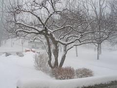 late january storm