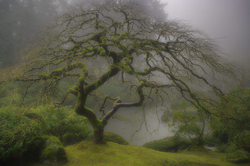 misty morning in the Japanese Garden