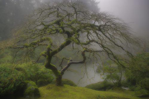 misty morning in the Japanese Garden