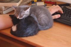 DSC_1286 (Pyroraptor) Tags: cats jane kittens ansel