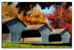 Horse Barns (dave_van) Tags: cambridge fall three nikon barns d70s livestock orton horsebarns dicksonpark