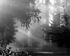 Morning Bliss (Micky**) Tags: trees blackandwhite sunlight nature leaves minnesota micky explore breathtaking shaftsoflight interestingness49 whohoo photosexplore ivebeentagged zlimen
