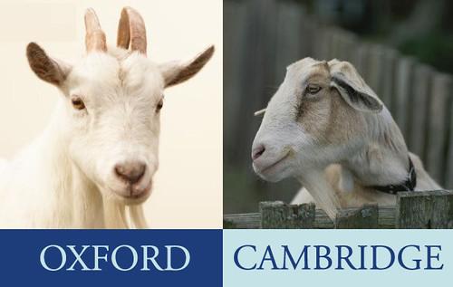 goat-race