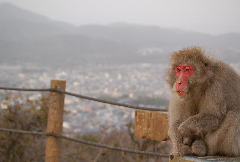 _monkey-19_