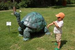 Galapagos Tortoise sculpture