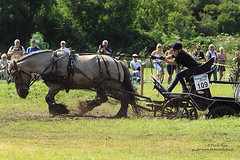 PH_8466 (Peet de Rouw) Tags: horse holland drafthorse workinghorse drafthorses peet rockanje werkpaard powerhorse trekpaard denachtdienst peetderouw peetderouwfotografie gettyimagesbeneluxq1