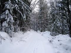 ... November 2007 im Bayerischen Wald, nahe Thurmansbang, Deutschland (bayernernst) Tags: november schnee winter snow forest bayern deutschland wald weg 2007 wege bayerischerwald bavarianforest winterwald 27112007 novemberwinter flickrblick umavabayerischerwald snc13489