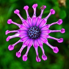 Insecto en la noria (hiskinho) Tags: flower color macro bokeh details flor bicho noria insecto atraccin colorphotoaward thebestofmimamorsgroups