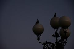 alba (Nicco__) Tags: david dawn alba firenze michelangelo piazzale notte almanecer niccollandi