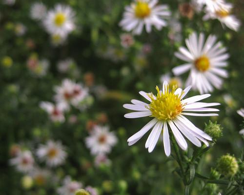 sweet little weeds