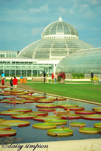 lily pads and dome