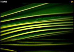 Stacked (anish vishwanathan) Tags: abstract tree green leaves closeup canon dark leaf pattern coconut kerala anish patta 400d 55250mmis
