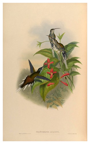005-An introduction to the Trochilidae  or family of humming-birds -Vol 1-1861-John Gould