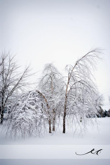 Snow Sotrm 1/28/09