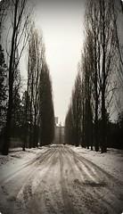 Dissolversi nel sogno (Borbuletachiara) Tags: trees travelling alberi neve kodaktrix ferrara prospettiva analogic certosa
