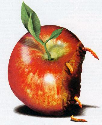 Rotten Apple photo