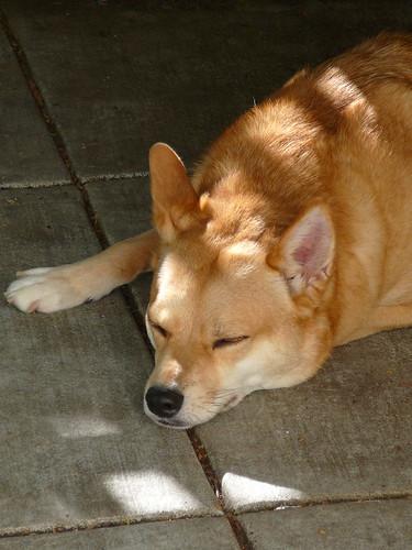 sleepy Ki