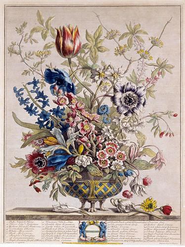 002-Febrero-los doce meses del año en flores