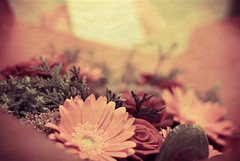 Birthday Bouquet (SachieNagasawa) Tags: birthday pink stilllife plant flower texture nature fleur plante season spring nikon sigma bouquet printemps vegetal sachie saison 105mm aphotoaday nagasawa d80 365project somewhair hantenshi lifypoem