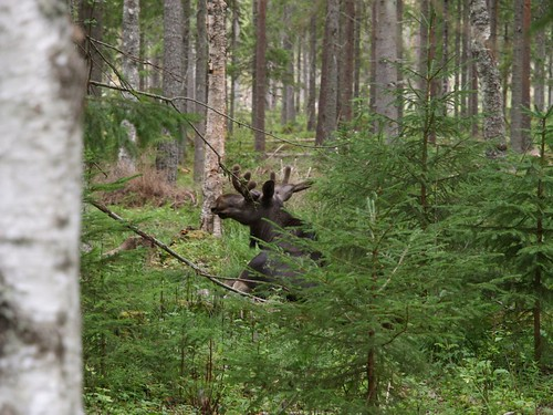 20090714_gavle_sundsvall_057
