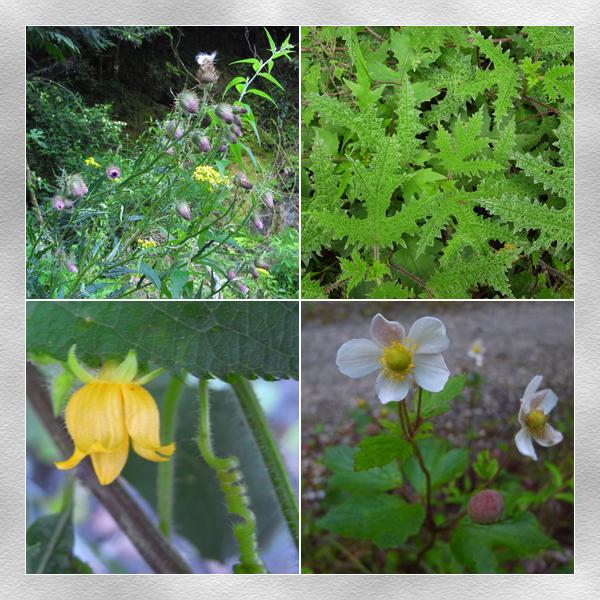 林道上的植物2