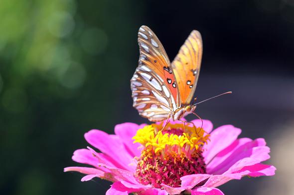 071809_butterfly03