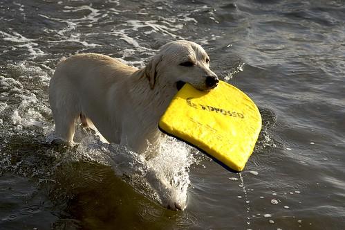 海灘游狗比比
