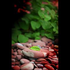 Zen Rock (Tim Leverett) Tags: stilllife water canon leaf interesting rocks rochester shore zen elements 5d conceptual lakeontario 5dm2 5dmii