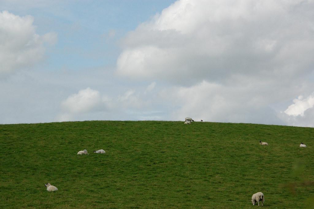 Nubes, hierba y ovejas