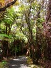 Forest Cathedral (jeanellen58) Tags: hawaii rainforest volcanonationalpark craterrimtrail urvision