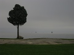 Tree by a Rock (gan.drak) Tags: ocean sky lighthouse tree rock ma arbol massachusetts ciel cielo fairhaven arbre fortphoenixstatereservation