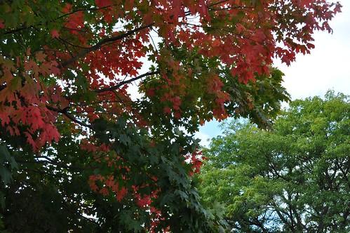 Fall Leaves in Early September