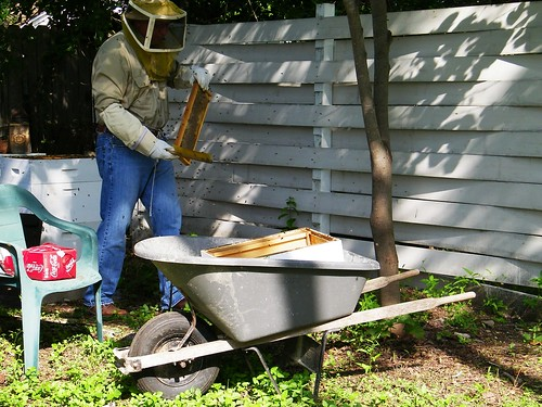 Getting frames from the backyard hives
