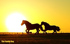 The Power and the Glory (The Family Dog) Tags: light sunset sun yellow caballo power glory