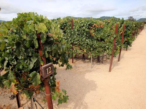 DSC24500, Clos du Val Winery, Napa Valley, California, USA