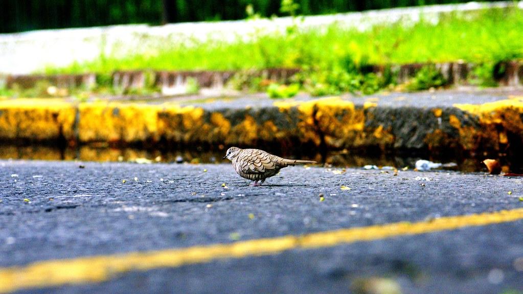 Bird day...