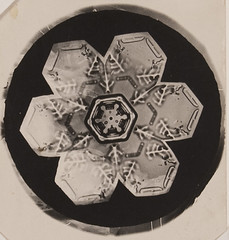 Untitled (Snowflake)