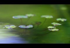 Monet à ma manière (Maryse Algoet) Tags: ngc nikond90 estremità discoveryphotos nikkor135f2 nationalphotographic flicktravelaward
