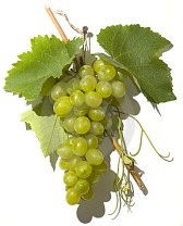 Фото 1 - Умный виноград