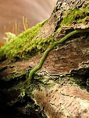 (Tölgyesi Kata) Tags: botanicalgarden füvészkert budapest withcanonpowershota620 botanikuskert greenhouse zöld